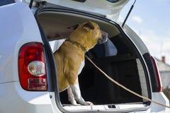 在一辆白色汽车的狗 免版税库存图片