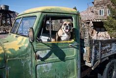 在一辆老绿色卡车的牛头犬 免版税库存图片