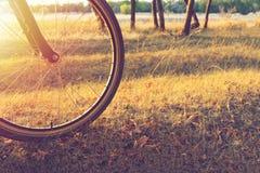 在一辆自行车的步行在太阳通过一辆自行车轮子发光在森林里的秋天森林里 库存照片