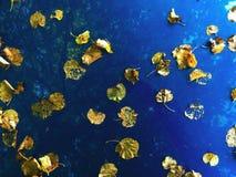 在一辆蓝色汽车的下落的黄色叶子 免版税库存图片