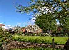 在一间农舍前面的开花的苹果树与盖的ro 免版税库存图片