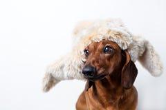 在裘皮帽的狗 免版税库存图片