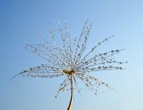 在一颗蒲公英种子的露滴反对天空 免版税图库摄影