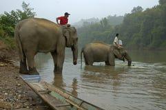 在一头大象顶部的人在湄公河 库存照片