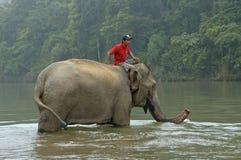 在一头大象顶部的人在洗涤哺乳动物的湄公河 库存图片