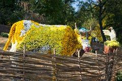 在一头母牛的spahe的花床与五颜六色的菊花的 Parkland在基辅,乌克兰 免版税库存图片