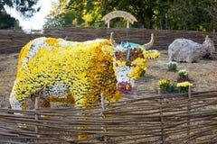 在一头母牛的spahe的花床与五颜六色的菊花的 Parkland在基辅,乌克兰 库存图片