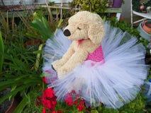 在一件浅粉红色的芭蕾舞短裙的小狗 库存照片