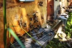 在一间蜂房的蜂房有飞行到着陆的蜂的在g上 库存图片