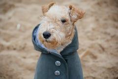 在一件雨衣的狗在海滩 免版税图库摄影