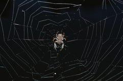 在一spiderweb中间的一只棕色蜘蛛在一个黑湖 库存照片