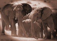 在一waterhole附近的大象在与一个vignetted边缘的乌贼属-万基国家公园 免版税库存图片