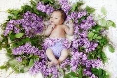 在丁香花摇篮的新出生的女孩  库存图片