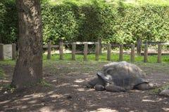 在七色的地球的巨型乌龟 免版税库存照片