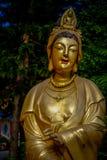 在万佛寺在沙公锡,香港的印象深刻的金黄雕象 库存照片