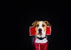 在万圣夜服装的狗 免版税图库摄影