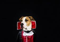 在万圣夜服装的狗 图库摄影