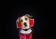 在万圣夜服装的狗 库存照片