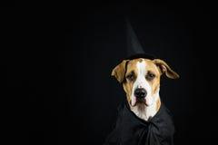 在万圣夜服装的狗 免版税库存图片