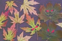 在万圣夜样式的黑暗的秋季样式-槭树离开以邪恶的面孔的形式与红色眼睛在黑背景 库存图片