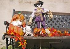 在万圣节装饰的达尔马希亚小狗 免版税库存照片