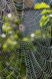 在万维网之下的蜘蛛阳光 免版税库存照片