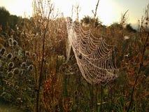 在万维网的露水 早晨在草甸 免版税库存照片