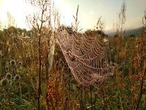在万维网的露水 早晨在草甸 免版税图库摄影