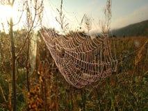 在万维网的露水 早晨在草甸 免版税库存图片