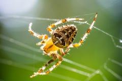 在万维网的蜘蛛 图库摄影