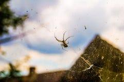 在万维网的蜘蛛 免版税库存照片
