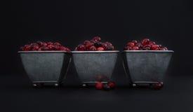 在三个有脚的金属容器堆积的新鲜的蔓越桔反对黑色 库存照片
