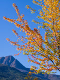 在三文鱼胳膊的秋天颜色 免版税库存照片