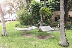在三棵树暂停的两个吊床 免版税库存图片