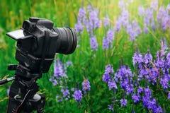 在三脚架射击的数字式专业照相机在庭院里开花 库存照片