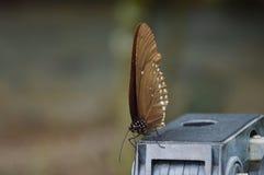 在三脚架头的蝴蝶 库存照片
