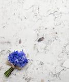 在三角洲白色石英co的春天蓝色野花Scilla花束 库存照片