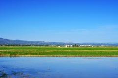 在三角洲del埃布罗的稻田,在卡塔龙尼亚,西班牙 库存图片