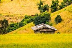 在上流9的稻米 库存图片
