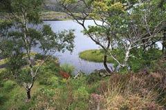 在上部湖附近的美好的植被 免版税库存图片