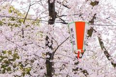 在上野公园,东京日本的樱花节日 库存图片
