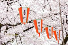 在上野公园,东京日本的樱花节日 库存照片