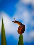 在上面的一只蜗牛 图库摄影