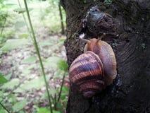 在上面跑的细节蜗牛 免版税库存照片