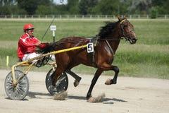 在上马具的赛马比赛期间的马 库存图片
