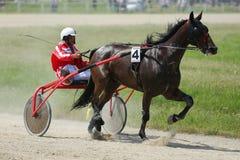在上马具的赛马比赛期间的马 库存照片