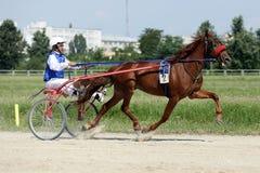 在上马具的赛马比赛期间的马 免版税库存图片