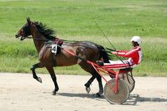 在上马具的赛马比赛期间的马 图库摄影