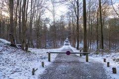 在下个标记的禁止停车标志在冬天森林里在比利时1月,布鲁塞尔, 库存图片