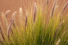 在下午光的野草 库存照片